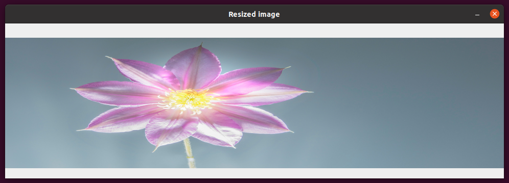 Input image height changed to 256 pixels.